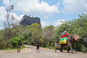 スリランカ シーギリヤ・ロックの象タクシーの写真素材 [FYI01748689]