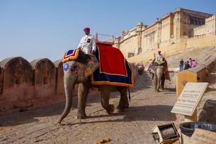 インド ゾウのタクシーの写真素材 [FYI01748737]