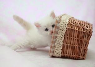 かごと猫の写真素材 [FYI01748750]