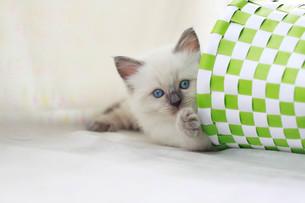かご猫の写真素材 [FYI01748761]