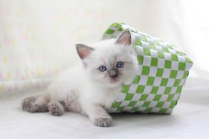 かご猫の写真素材 [FYI01748799]
