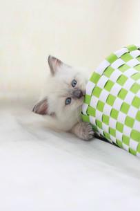 かご猫の写真素材 [FYI01748814]