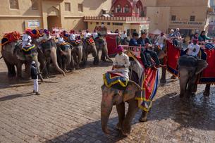 インド ゾウのタクシーの写真素材 [FYI01748821]