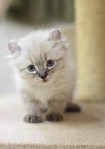 みつめる子猫の写真素材 [FYI01748829]