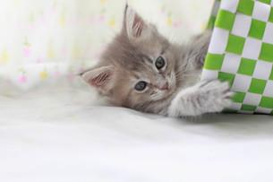 寝むそうな子猫の写真素材 [FYI01748830]