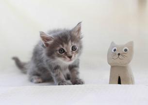 おもちゃと子猫の写真素材 [FYI01748863]