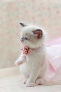横向いてる子猫の写真素材 [FYI01748873]