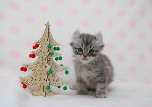 クリスマスと猫の写真素材 [FYI01748874]