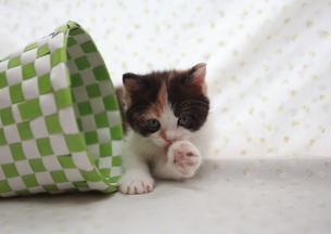 なめる猫の写真素材 [FYI01748886]