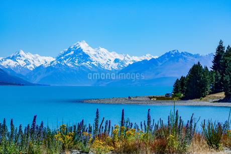 ニュージーランド、プカキ湖からのマウントクックの写真素材 [FYI01748894]