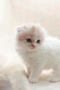 みつめる子猫の写真素材 [FYI01748900]