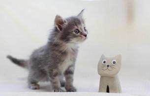 おもちゃと子猫の写真素材 [FYI01748944]