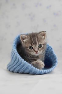 みつめる子猫の写真素材 [FYI01748955]