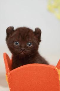 みつめる黒猫の写真素材 [FYI01748998]