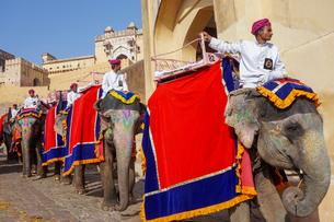 インド ゾウのタクシーの写真素材 [FYI01749002]