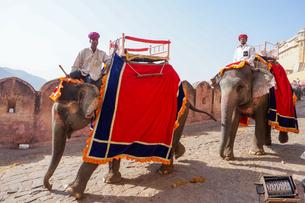 インド ゾウのタクシーの写真素材 [FYI01749030]