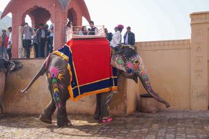 インド ゾウのタクシーの写真素材 [FYI01749115]