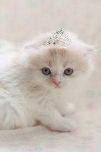 みつめる子猫の写真素材 [FYI01749190]
