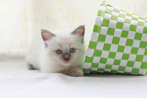 かご猫の写真素材 [FYI01749219]