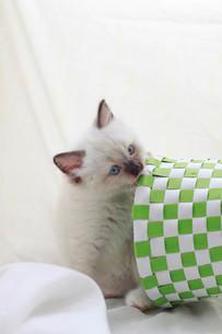 かご猫の写真素材 [FYI01749248]