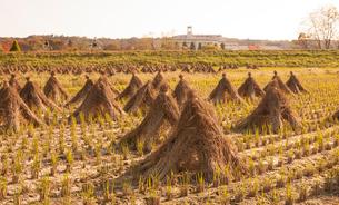 稲藁のピラミッド組みの写真素材 [FYI01749505]