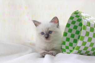 かご猫の写真素材 [FYI01749514]