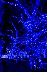 中目黒イルミネーション 青の洞窟の写真素材 [FYI01749753]