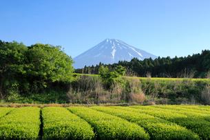 静岡の茶畑と富士山の写真素材 [FYI01750100]