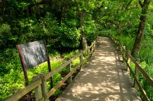 柿田川公園の遊歩道の写真素材 [FYI01750225]
