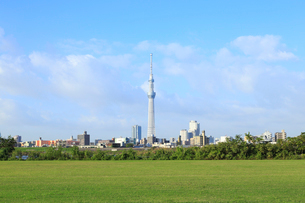 緑の芝生と東京スカイツリーの写真素材 [FYI01750364]