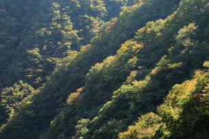 斜光の当たる山の稜線の写真素材 [FYI01750480]