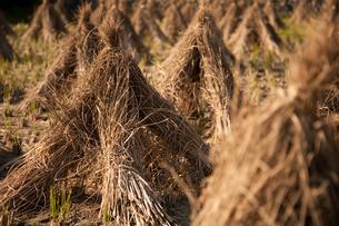 稲藁のピラミッド組みの写真素材 [FYI01750531]