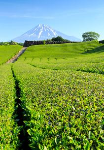 静岡の茶畑と富士山の写真素材 [FYI01750544]