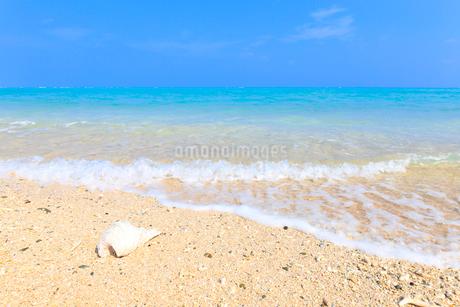 波打ち際の白い貝殻の写真素材 [FYI01750589]