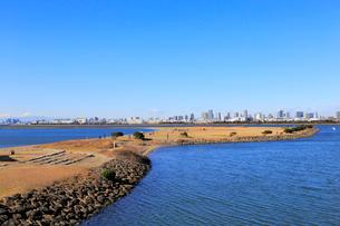 葛西海浜公園 西なぎさの写真素材 [FYI01750701]