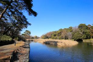 大宮公園のボート池の写真素材 [FYI01750989]