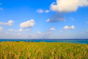 南の島のサトウキビ畑と海の写真素材 [FYI01751175]
