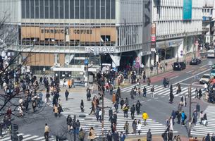 渋谷 スクランブル交差点の写真素材 [FYI01751212]