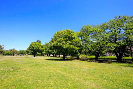 新緑の公園の写真素材 [FYI01751388]