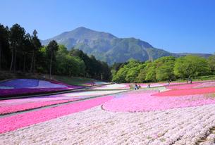 羊山公園 芝桜の丘と武甲山の写真素材 [FYI01751397]