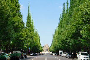 神宮外苑いちょう並木の写真素材 [FYI01751403]