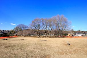 武蔵国分寺跡の写真素材 [FYI01751433]