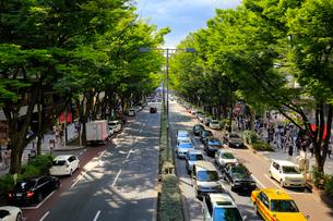 表参道のケヤキ並木の写真素材 [FYI01751475]