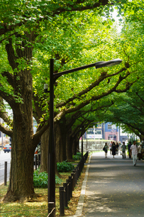 神宮外苑いちょう並木の写真素材 [FYI01751495]
