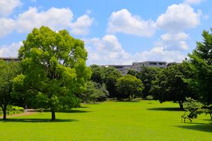 武蔵国分寺公園の写真素材 [FYI01751511]