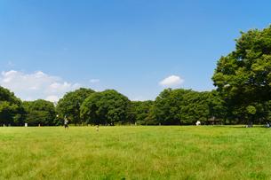代々木公園の写真素材 [FYI01751516]