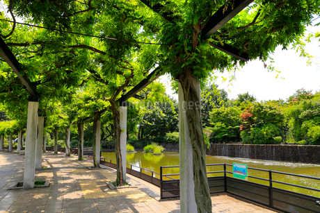 武蔵国分寺公園の写真素材 [FYI01751618]