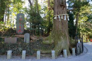 高尾山 たこ杉の写真素材 [FYI01751625]