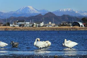 冬の多々良沼の写真素材 [FYI01751729]