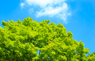 青空と新緑の写真素材 [FYI01751824]